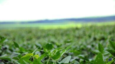 produto biológico soja