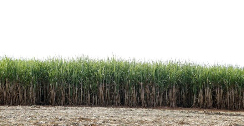 herbicida-cana-tecnologia