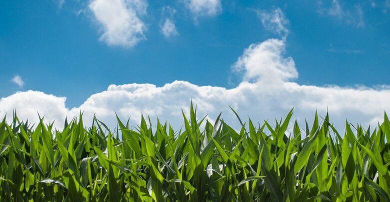 controle-pragas-agricultura