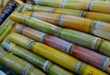 aplicação-defensivos-biológicos-irrigação-eficaz