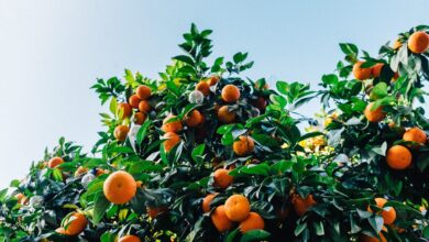 fungicida-multissítio-citros-brasil