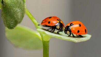 parceria-desenvolvimento-defensivos-biológicos