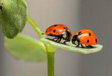 agrivalle-investimento-biológicos