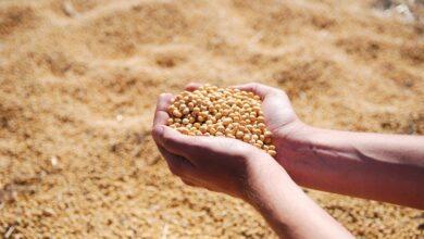 rizobacter-parceria-inovar-tratamento-sementes
